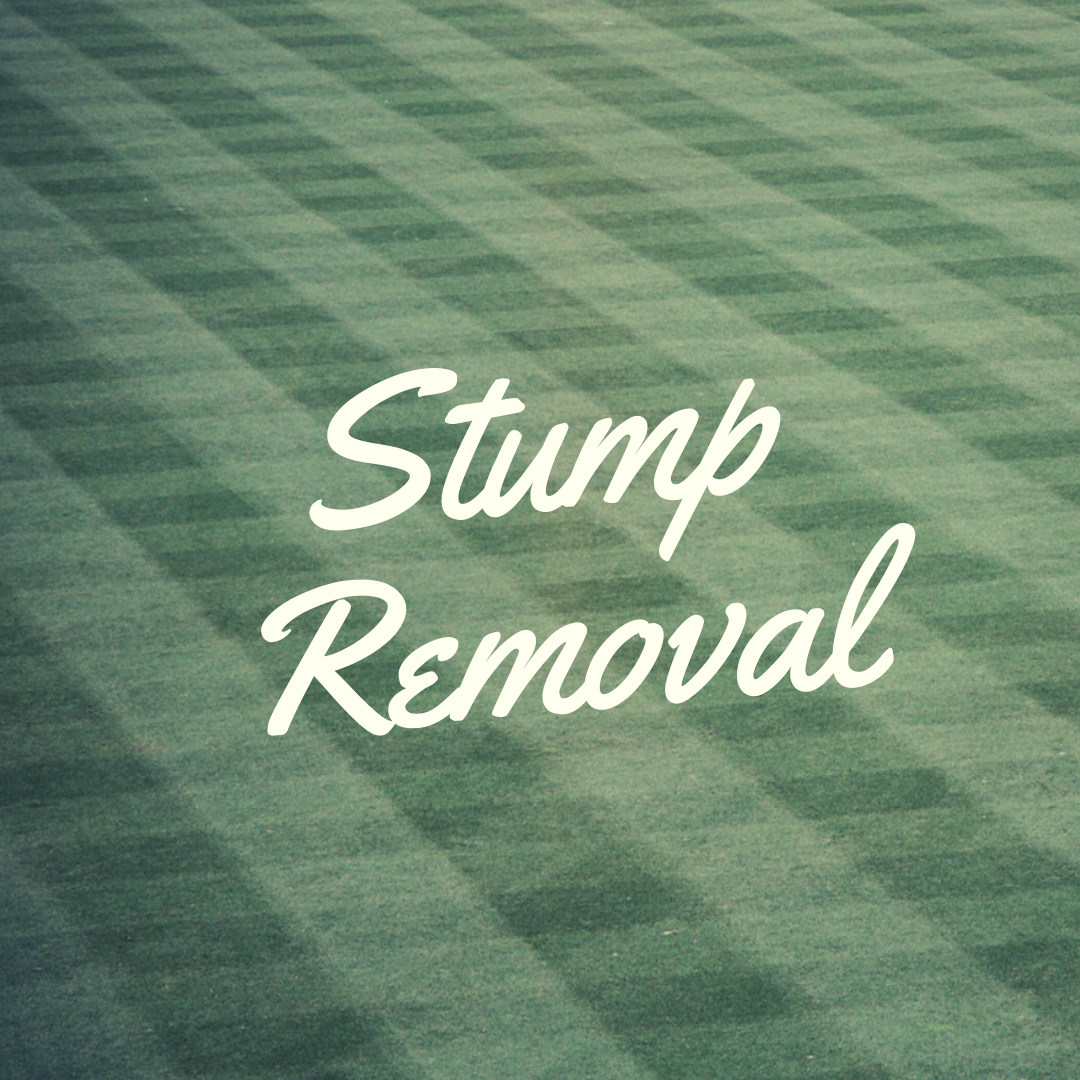 stump removal in plainfield