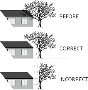 tree-pruning-to-clear-plainfield